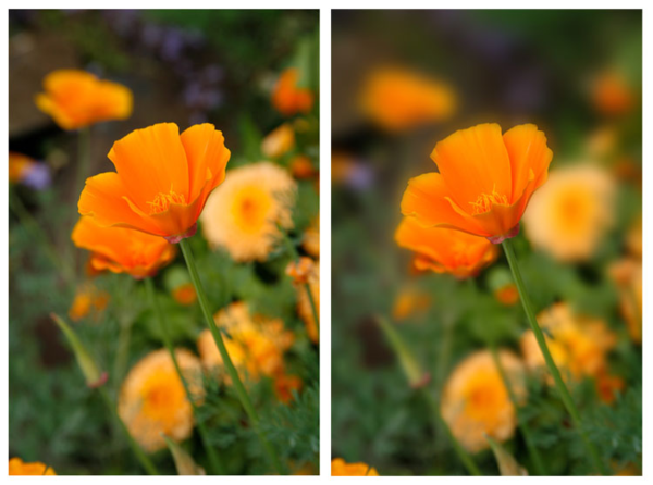 Normal (left) vs. macro mode (right).